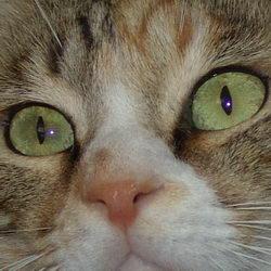 הסגולות של אבן עין החתול